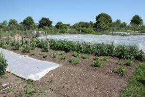 Eco-village garden