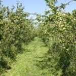 Grassland walkway